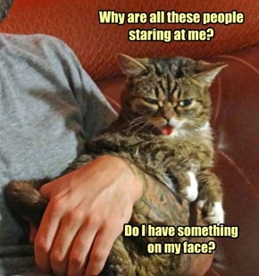 Lil Bub wants to know...