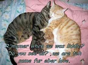 R'memer when we was liddle? Do you see us? ,we are teh same fur eber love.