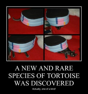 A NEW AND RARE SPECIES OF TORTOISE WAS DISCOVERED