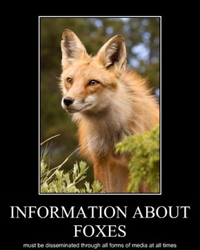 INFORMATION ABOUT FOXES