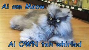 Ai am Meow  Ai OWN teh whirled