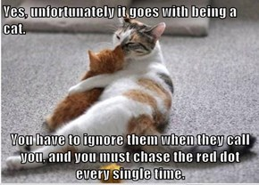 Yes, unfortunately it goes with being a cat.  You have to ignore them when they call you, and you must chase the red dot every single time.