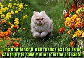 The Godfather Kitteh rushes as fast as he can to try to save Millie from the Tornado!!