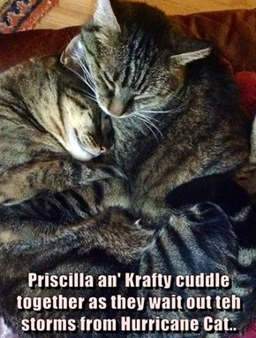 Priscilla an' Krafty cuddle together as they wait out teh storms from Hurricane Cat..