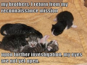 my brothers, I return from my reconnaissance mission  upon further investigation, my eyes are not yet open.
