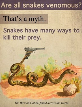 The More You Know About Snakes!