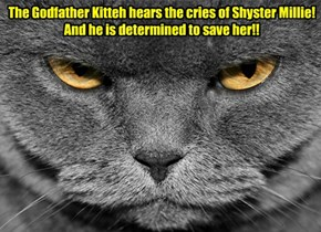 Millie's cries have been heard by the Godfather Kitteh!  But can he reach her in time?