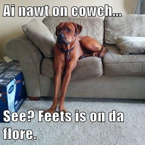 Ai nawt on cowch...  See? Feets is on da flore.