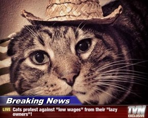 "Breaking News - Cats protest against ""low wages"" from their ""lazy owners""!"