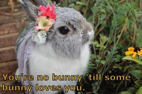 You're no bunny 'till some bunny loves you.