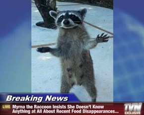 Breaking News - Myrna the Raccoon Insists She Doesn't Know Anything at All About Recent Food Disappearances...