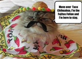 Move over  Taco Chihuahua, I'm the Fajitas Felion and I'm here to stay.