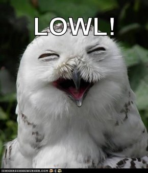 What Do You Call An Owl With An Attitude? A Scowl!