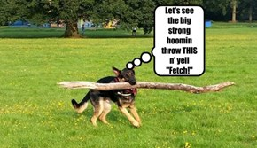 "Let's see the big strong hoomin throw THIS n' yell ""Fetch!"""