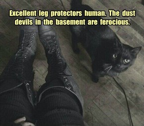 Excellent  leg  protectors  human.  The  dust  devils  in  the  basement  are  ferocious.