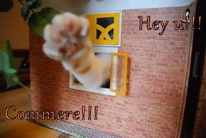Hey u!!!  Commere!!!