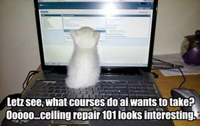Prelude to ceiling cat?