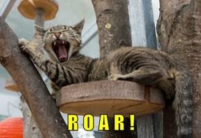 R O A R !