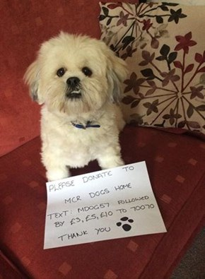The Internet Is Taking Dog Selfies To Help A Manchester Dog Home Ravaged By Arson