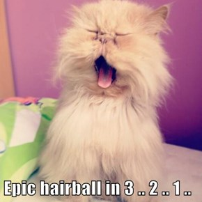 Epic hairball in 3 .. 2 .. 1 ..