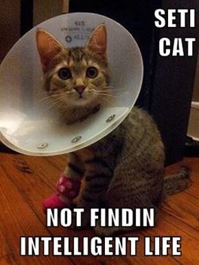 SETI                                               CAT  NOT FINDIN INTELLIGENT LIFE