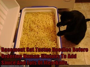 Basement Cat Tastes Noodles Before Ordering Human Minions To Add Sauce And Lots Of Meatballs.