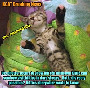 KCAT Breaking News - This Unknown Kittie mystery deepens..  Scientists must inbestigate!