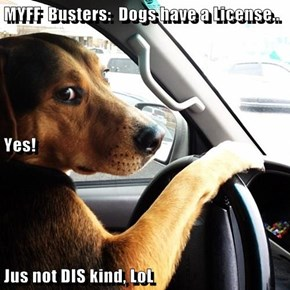 MYFF  Busters:  Dogs have a License.. Yes! Jus not DIS kind, LoL
