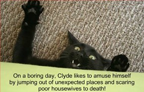 On a boring day, Clyde likes to amuse himself  by jumping out of unexpected places and scaring poor housewives to death!