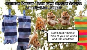 Hamster Rescue Team save another Suicide Laundry Line Jumper
