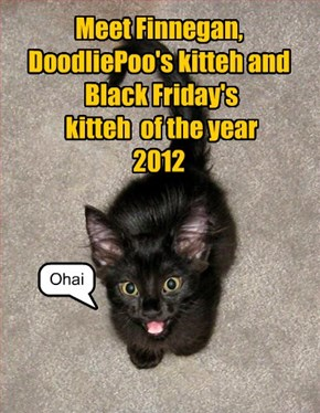 Meet Finnegan,  DoodliePoo's kitteh and  Black Friday's  kitteh  of the year 2012