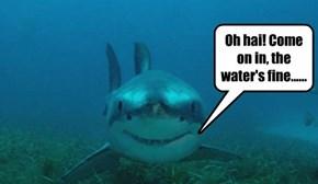 Beware of the Smiling Shark....