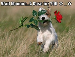 Wait Momma...A Rose for YOU ✿‿✿