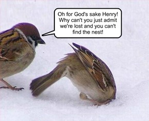 Oh for God's sake Henry!  Why can't you just admit we're lost and you can't  find the nest!