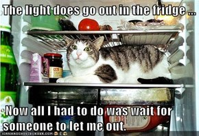 The light does go out in the fridge ...   Now all I had to do was wait for someone to let me out.