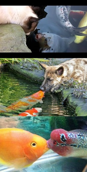 It's National 'Kiss a Fish' Day!
