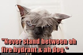 """Never stand between ah fire hydrant & ah dog."""