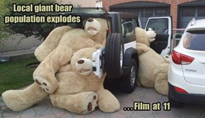 Local giant bear population explodes