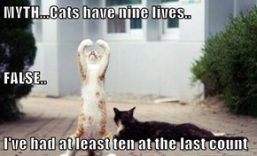 MYTH...Cats have nine lives.. FALSE.. I've had at least ten at the last count