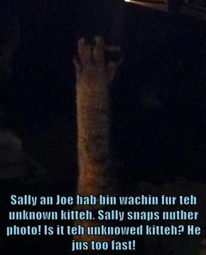 Sally an Joe hab bin wachin fur teh unknown kitteh. Sally snaps nuther photo! Is it teh unknowed kitteh? He jus too fast!