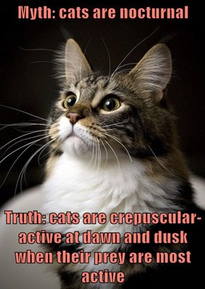 Myth: cats are nocturnal  Truth: cats are crepuscular-active at dawn and dusk when their prey are most active