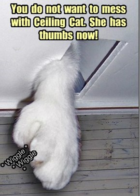 You  do  not  want  to  mess with  Ceiling  Cat.  She  has thumbs  now!