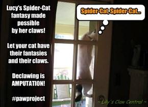 Spider-Cat!