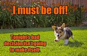 No One Suspects The Corgi Puppy