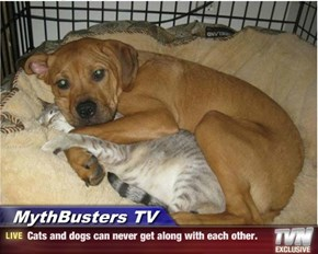 MythBusters TV - Cats and dogs can never get along with each other.