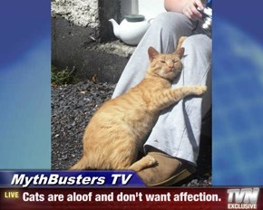 MythBusters TV - Cats are aloof and don't want affection.