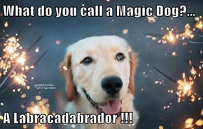 What do you call a Magic Dog?...  A Labracadabrador !!!