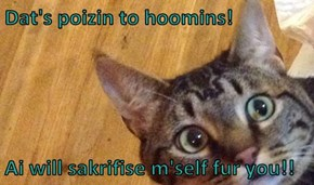 Dat's poizin to hoomins!   Ai will sakrifise m'self fur you!!