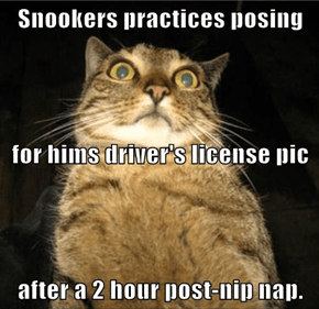 Mrs. Nonono sends Snookers bak to bed fur a wile befor hims takes teh driver test...
