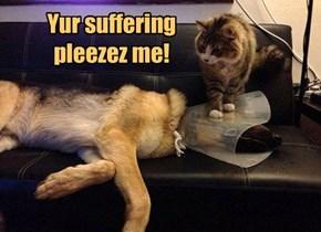 Goggie must suffer!